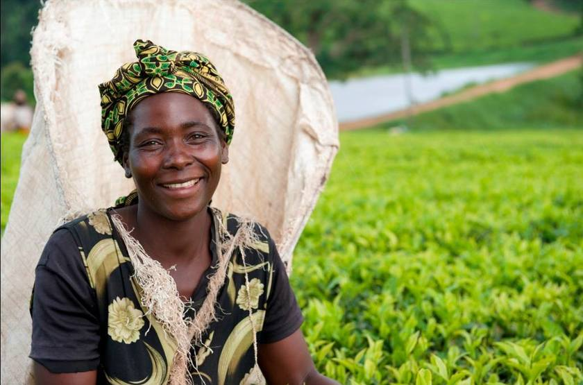 Cueilleuse de thé Thyolo, Malawi
