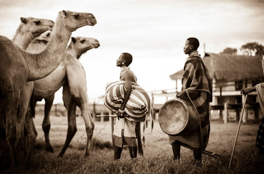 Safari à dos de chameau à Segera, Laikipia, Kenya