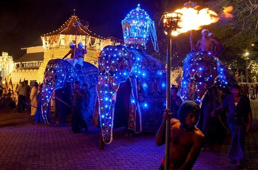 Eléphants caparaçonnés, fête de Perahara à Kandy, Sri Lanka