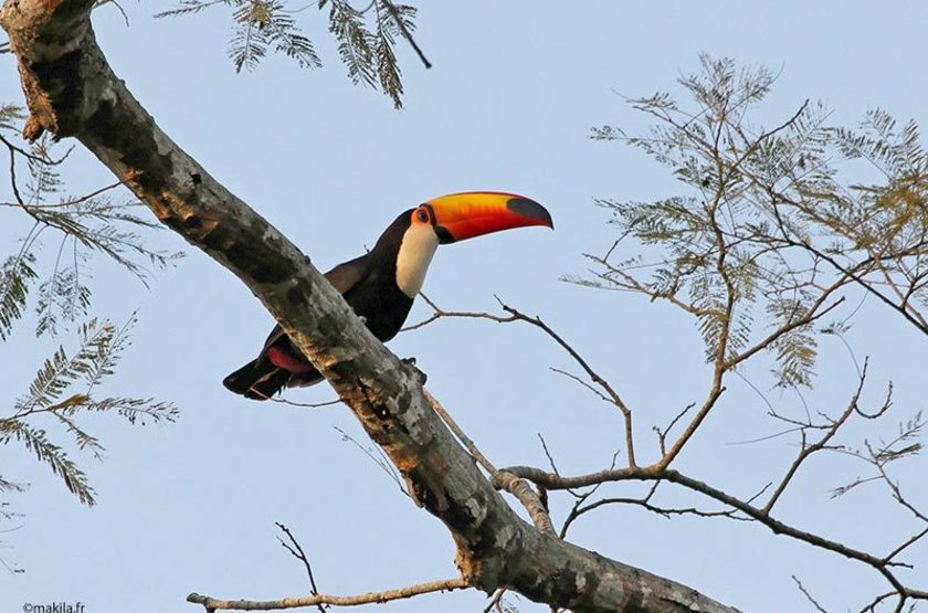Toucan coco slideshow