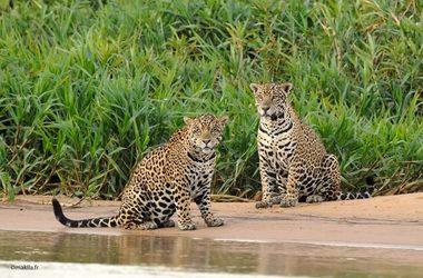 Amazonie et Pantanal, le Brésil grandeur nature, voyage Amériques