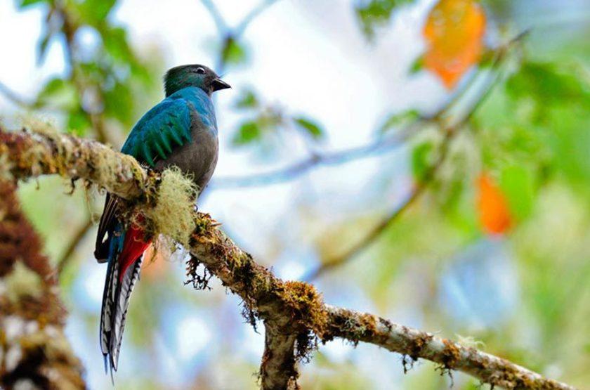 Quetzal, Costa Rica