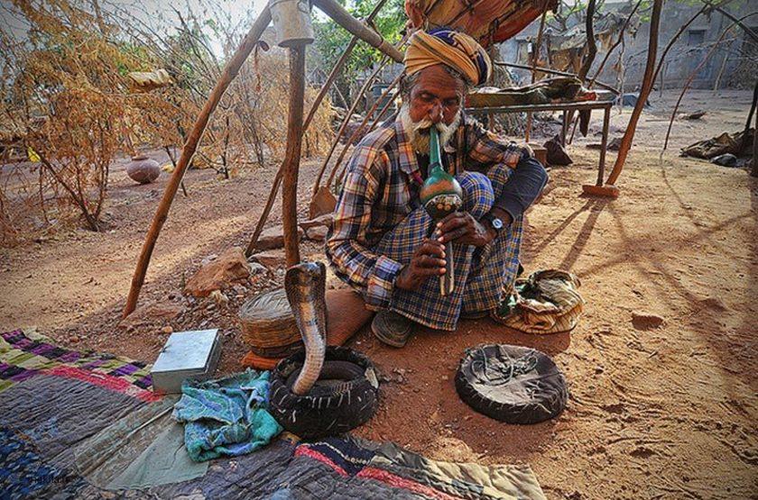 Charmeur de serpents, Inde, Rajasthan