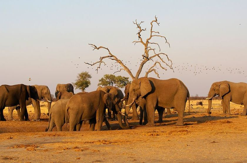 Réserve de la Linyanti, Botswana