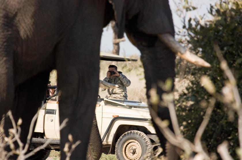 Safari en 4x4 dans le delta de l'Okavango, Botswana