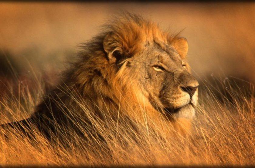 Réserve de Madikwe, Afrique du Sud
