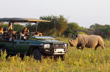 Safaris en Afrique du Sud : réserves de Madikwe et de Marakele, voyage Afrique