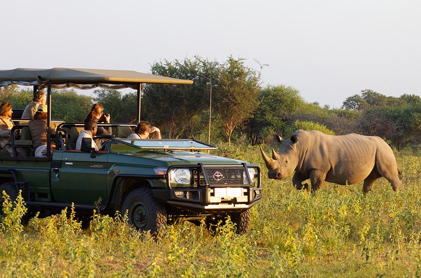 Safari en 4x4 à Madikwe, Afrique du Sud