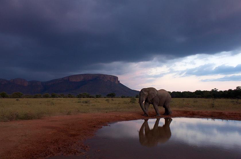 Réserve du Waterberg, Afrique du Sud