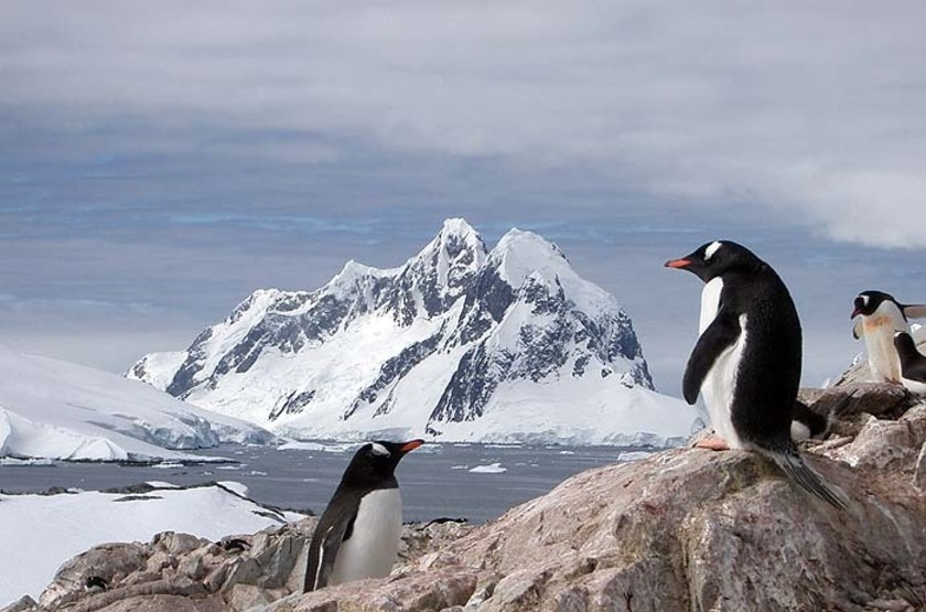 Pinguoin , Antarctique