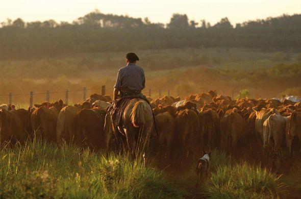L'Argentine : faune, flore, gauchos, voyage Amériques
