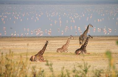 Duo Tanzanie - Zanzibar, voyage Afrique
