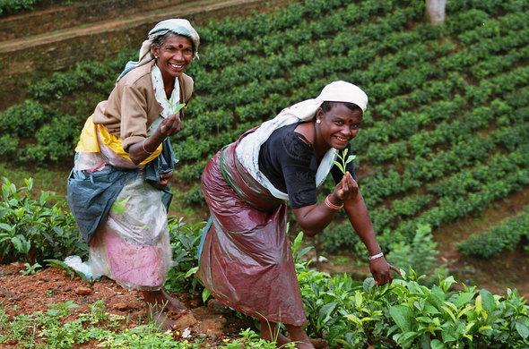 Voyage au pays des thés et des épices, voyage Asie