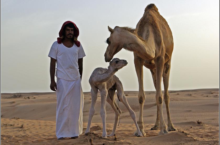 Désert de Wahiba, Oman