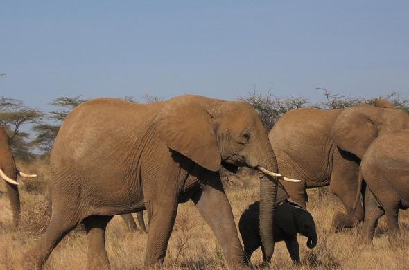 De Samburu à Masaï Mara, en passant par la Rift Valley, voyage Afrique