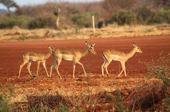 Combiné Afrique du sud Mozambique, voyage Afrique