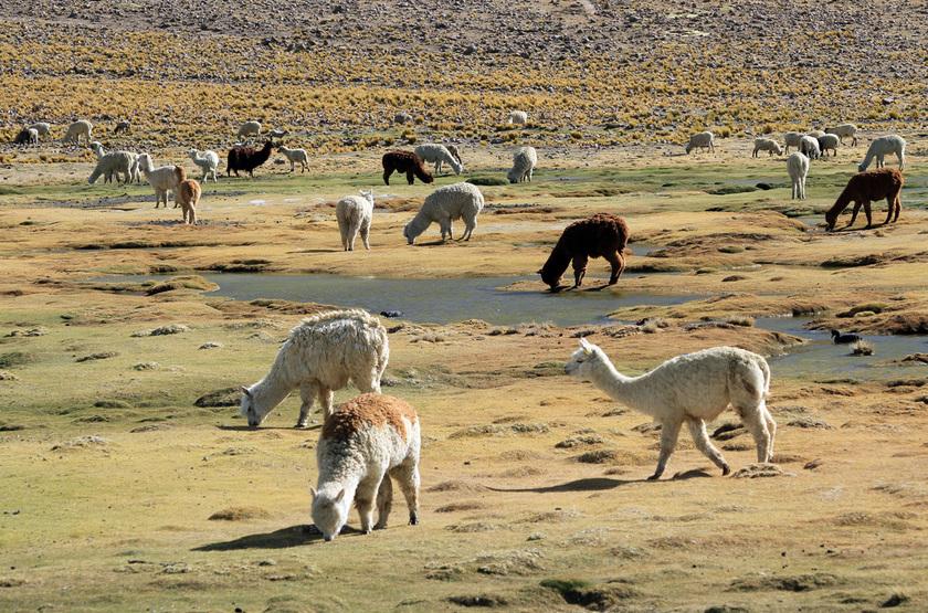 Autotour au Pérou