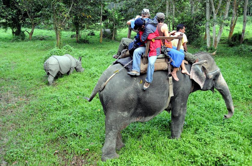 Safari à dos d'éléphant dans parc de Chitwan, Népal