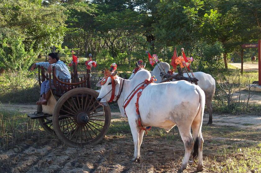 Scènes de vie, Birmanie