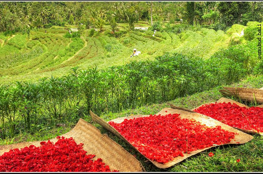 Fleurs pour offrandes, Bali, Indonésie