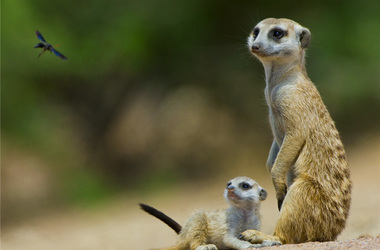 Safari de luxe au Kalahari, voyage Afrique
