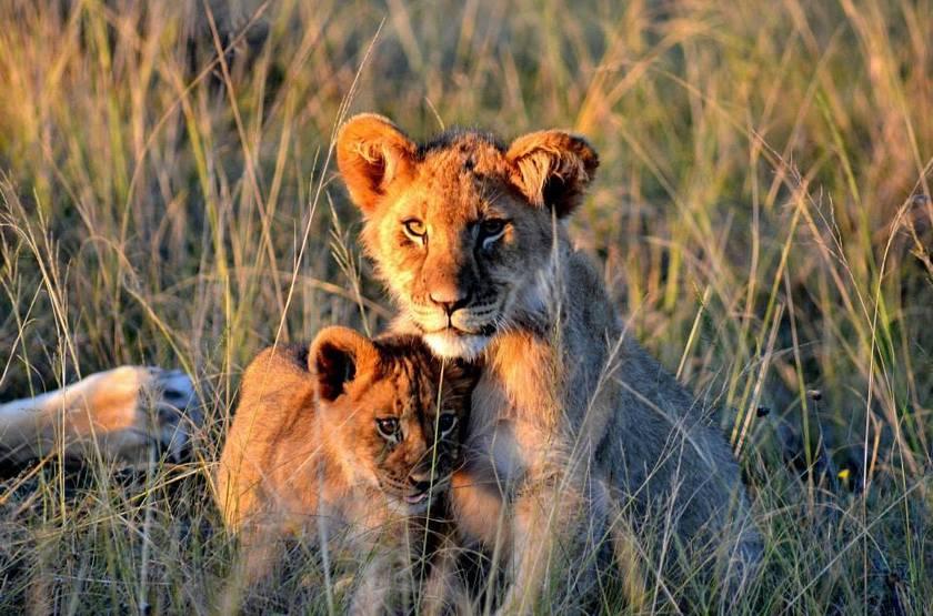 Réserve privée de Gondwana, Waterberg, Afrique du Sud