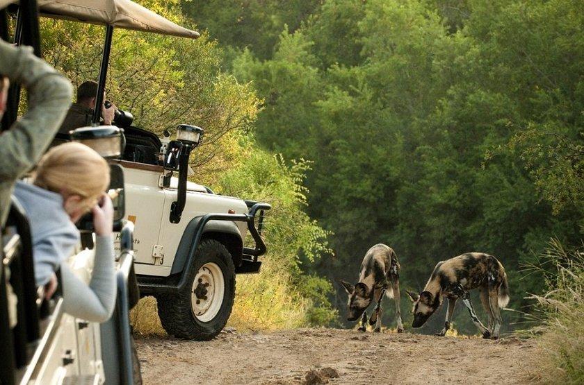 Safari à Morukuru, Afrique du Sud