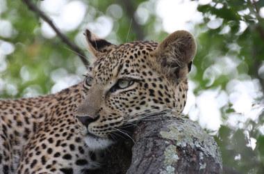 Combiné insolite Afrique du Sud et l'île Maurice, voyage Afrique