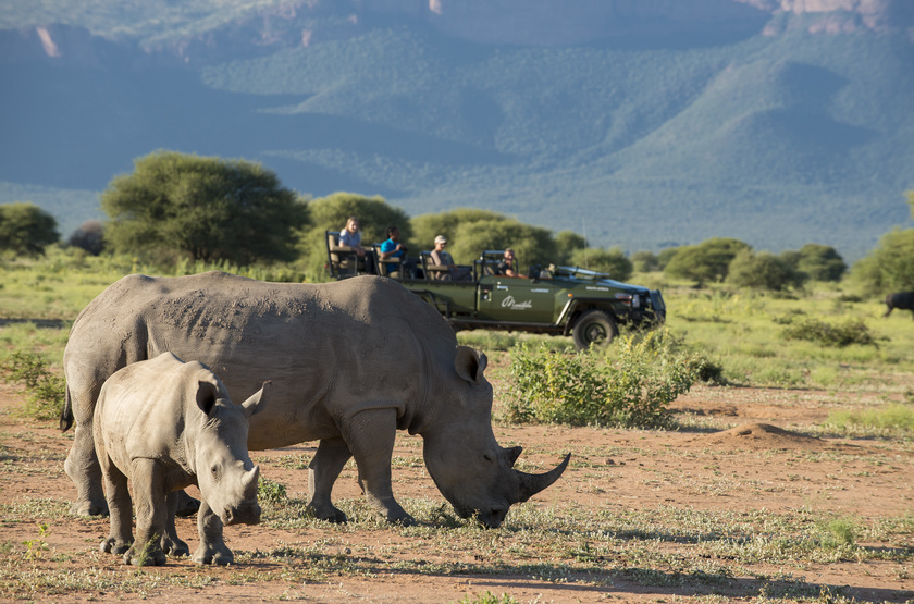 Afrique du Sud, réserve de Marakele