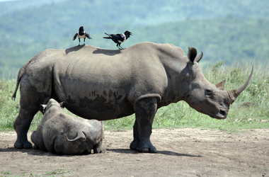 Safaris et plages en Afrique du Sud, voyage Afrique