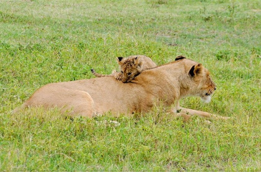Dans le Ngorongoro, Tanzanie