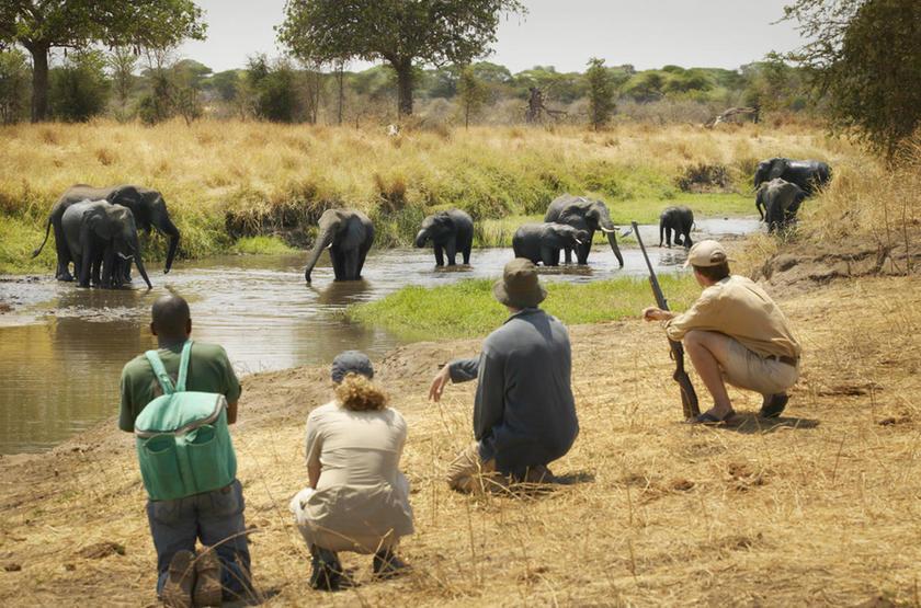 Safari à pied à Mwiba, Tanzanie