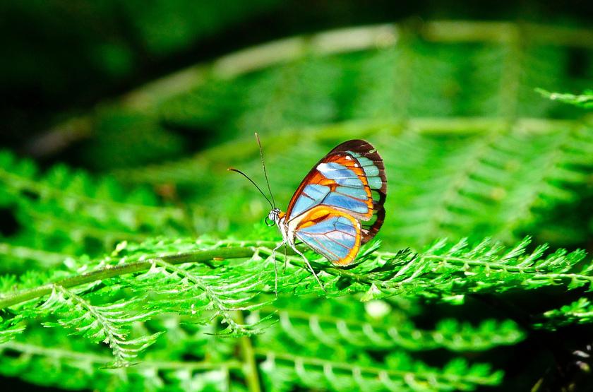 Dans le parc d'Arenal, Costa Rica