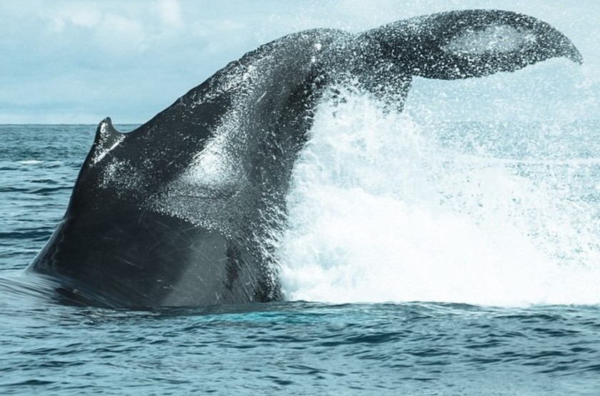 Baleine 2 slideshow