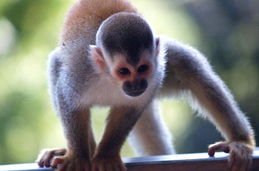 Punta renas monkey slideshow