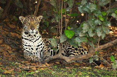 Les ailes du Pantanal et croisière sous l'œil du Jaguar, voyage Amériques