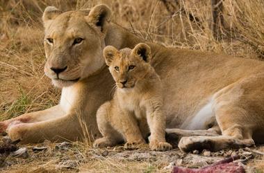 Namibie originale : les lions du désert et la fameuse Skeleton Coast, voyage Afrique