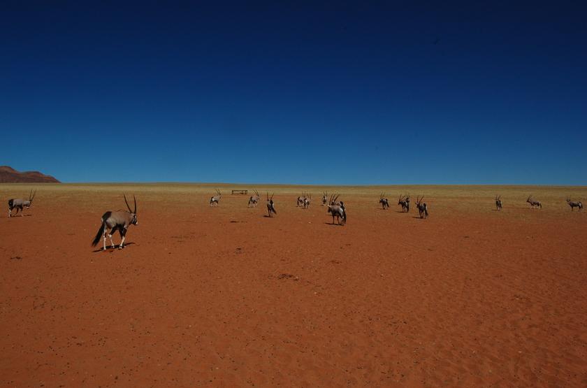Safari guidé dans le Kaokoland, Namibie