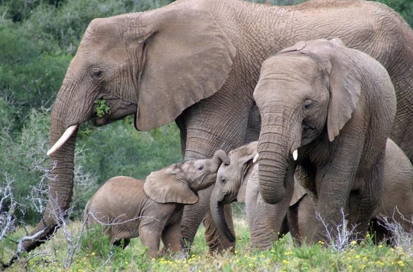 Safari en réserve privée, Afrique du Sud