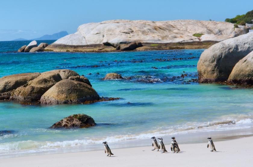 Boulder's, Cape Town, Afrique du Sud