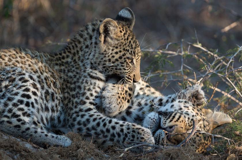 Réserve de Moremi, delta de l'Okvango, Botswana