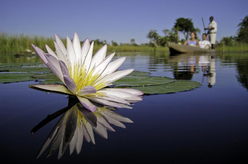 Reserve de Moremi, Delta de l'Okavango, safari en mokoro, Botswana