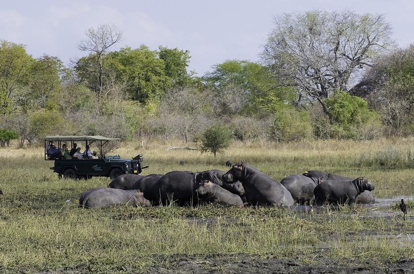 Safari à Mvuu Lodge, Liwonde, Malawi