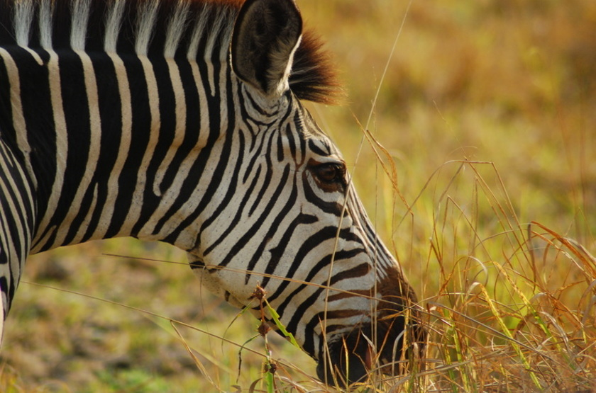 Safari à Tongole, Nkhotakota, Malawi