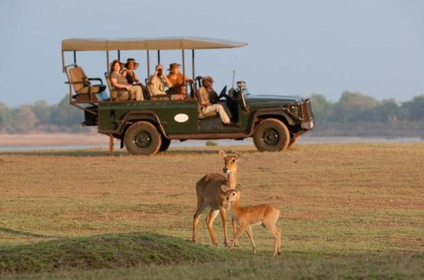 Safari en 4x4 en Zambie, South Luangwa