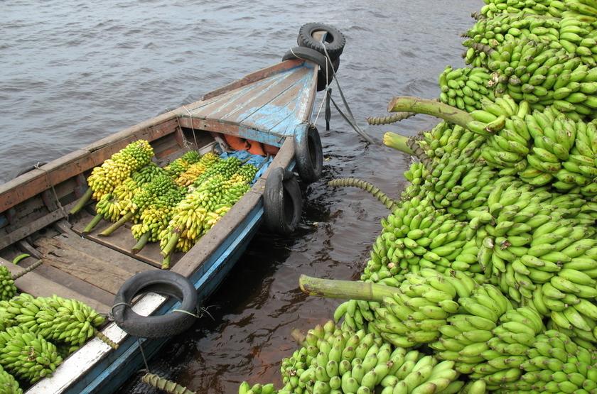 Culture de bananes, Musa, amazonie