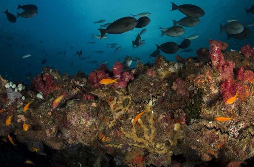 Récif corallien, Bazaruto, Mozambique