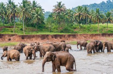 Les richesses du Sri Lanka en famille, voyage Asie