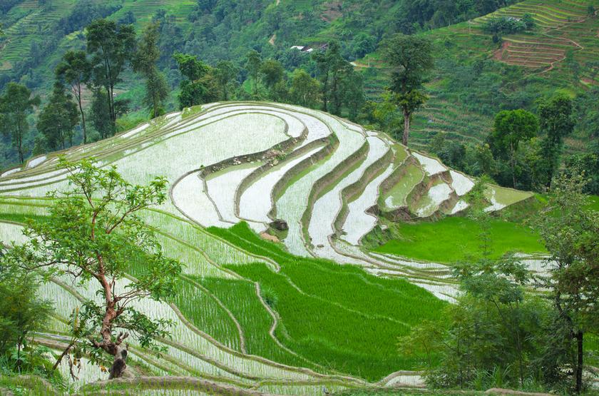 Dong Van, rizieres, Vietnam