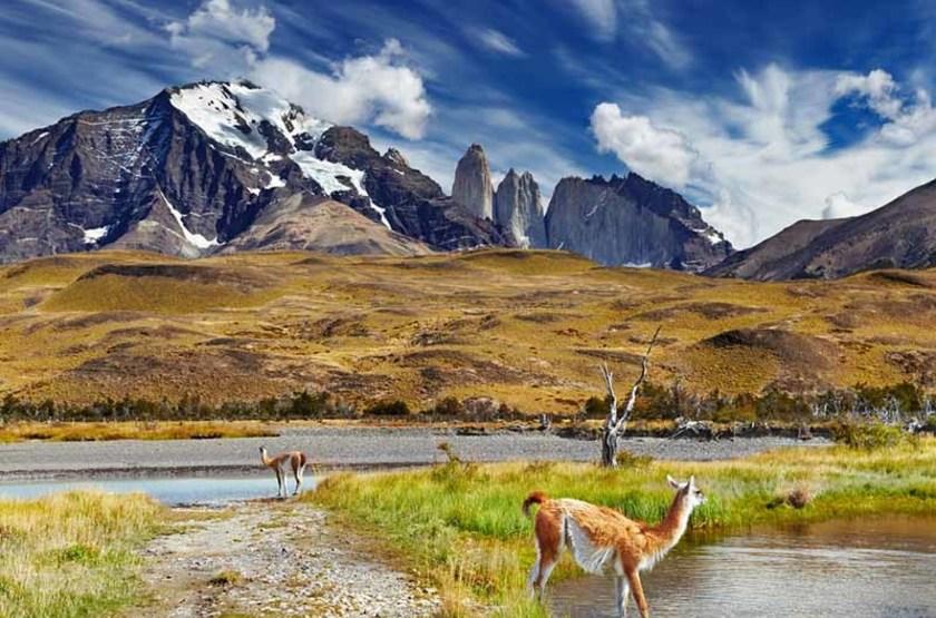 Guanaco dans le Parc National Torres Paine, Patagonie